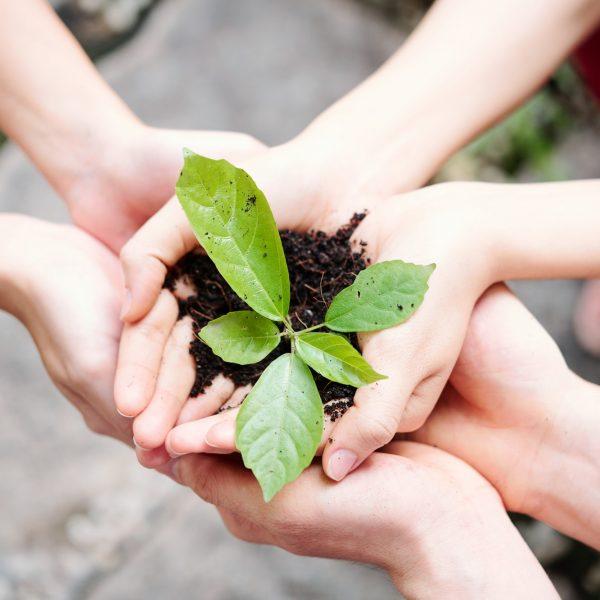 Terre plante